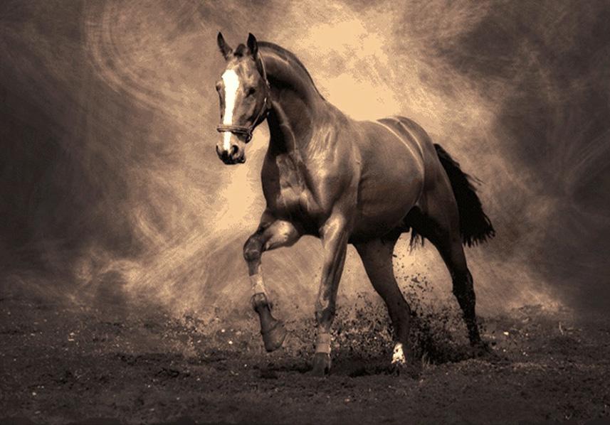 نخ و نقشه تابلو فرش اسب