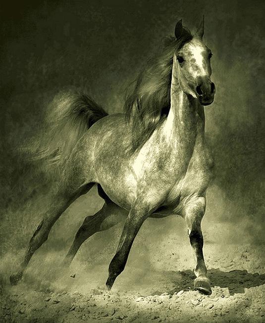نخ و نقشه تابلوفرش طرح اسب