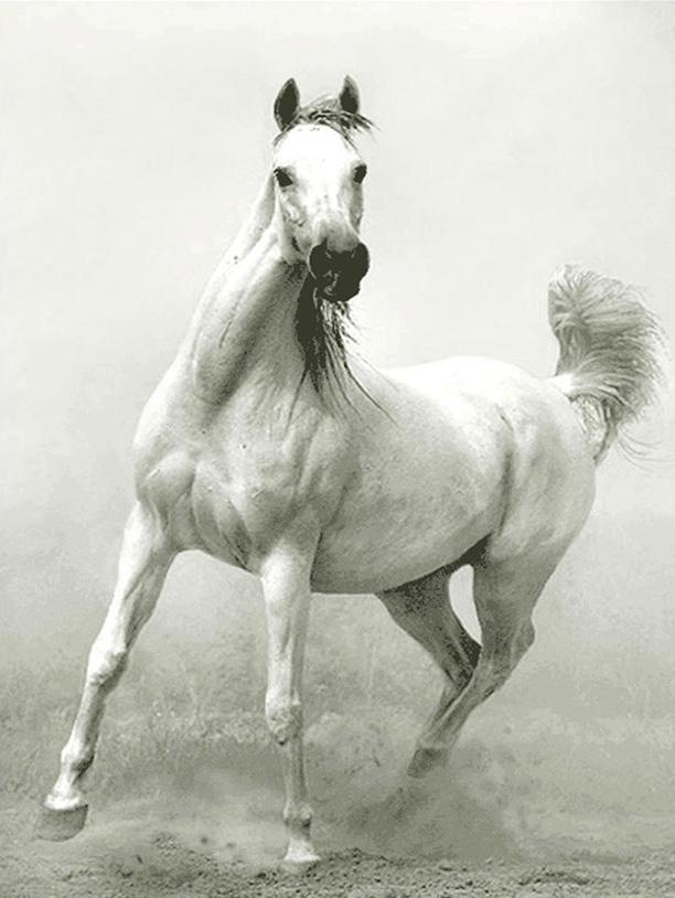 نخ و نقشه طرح اسب سفید کد 1320