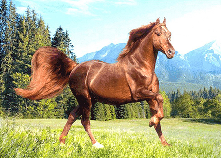 نخ و نقشه آماده بافت طرح اسب