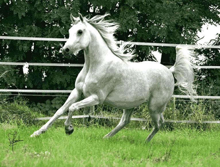 نخ و نقشه تابلو فرش طرح اسب دونده