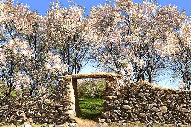 نخ و نقشه تابلوفرش شکوفه های بهاری