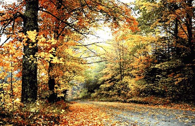 عکس نخ و نقشه آماده بافت طرح منظره جنگل و جاده پاییزی کد 633