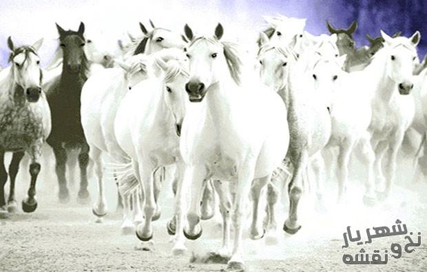 نخ و نقشه آماده بافت تابلو فرش طرح اسب های سفید کد 643