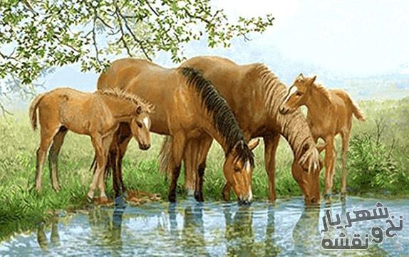 نخ و نقشه و مصالح و لوازم بافت تابلو فرش طرح آب خوری اسب ها