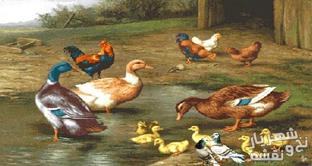 خرید آنلاین نخ و نقشه آماده بافت تابلو فرش طرح مرغ و خروس و اردک کد 656