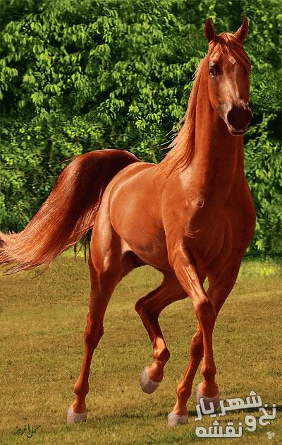 لوازم و مصالح بافت تابلوفرش طرح اسب قهوه ای کد 91518
