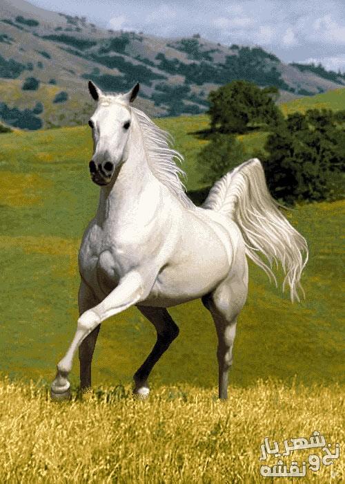 نخ و نقشه تابلو فرش اسب دونده سفید کد h-6319