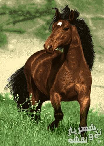 خرید نخ و نقشه تابلو فرش طرح اسب قهوه ای کد h-6386